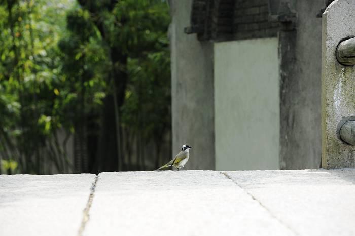 诗风作品:项目三月  乌镇春语  10
