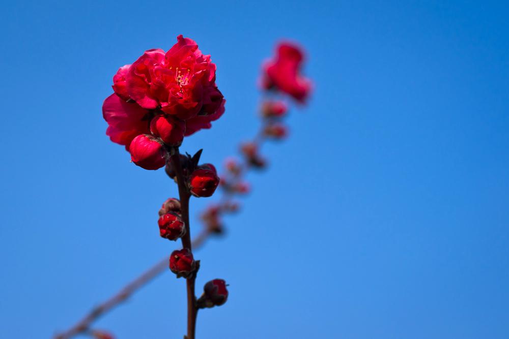 zorrofox作品:花