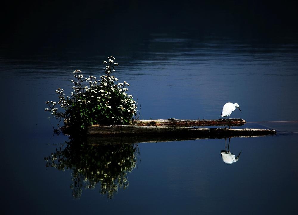 oldtoyota作品:白鹭泊孤舟