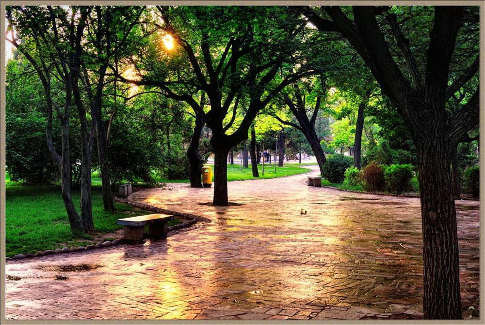 江边鸟作品:雨后复斜阳