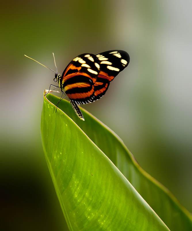 一二丁作品:蝴蝶