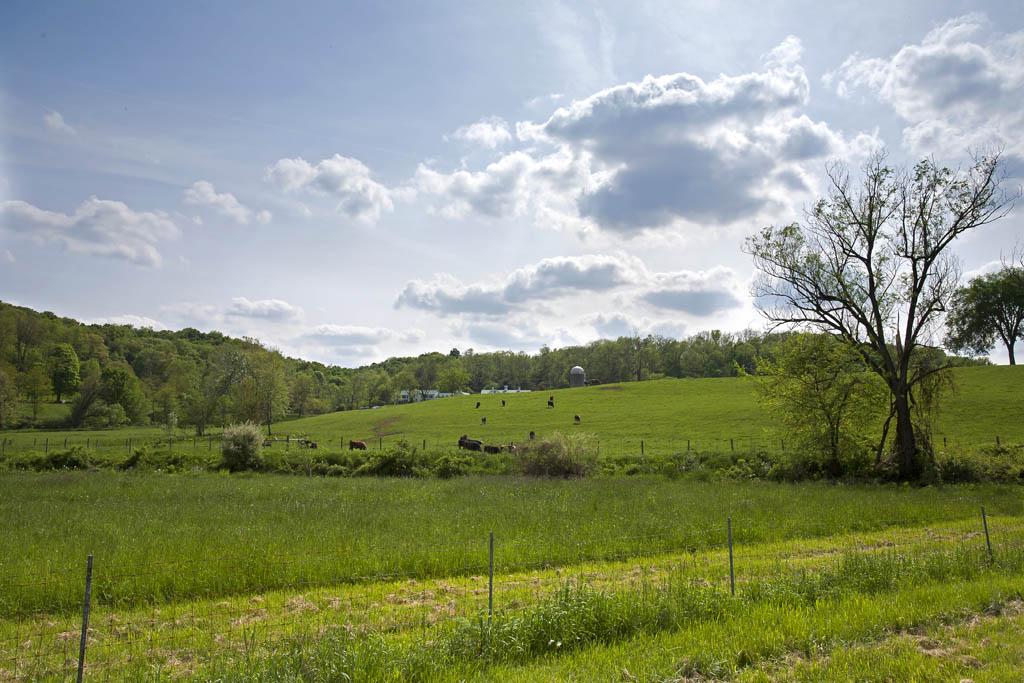 一二丁作品:初夏的农场