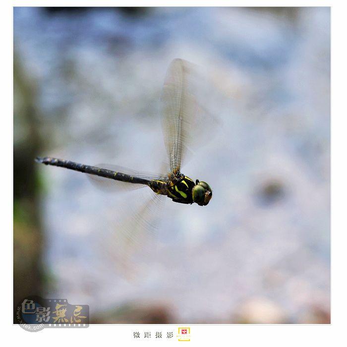 童心老男作品:林荫虫韵之十一组图 阿帕奇