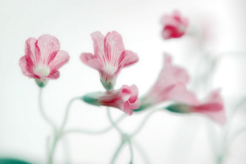 光头阿飞作品:阳台小野花