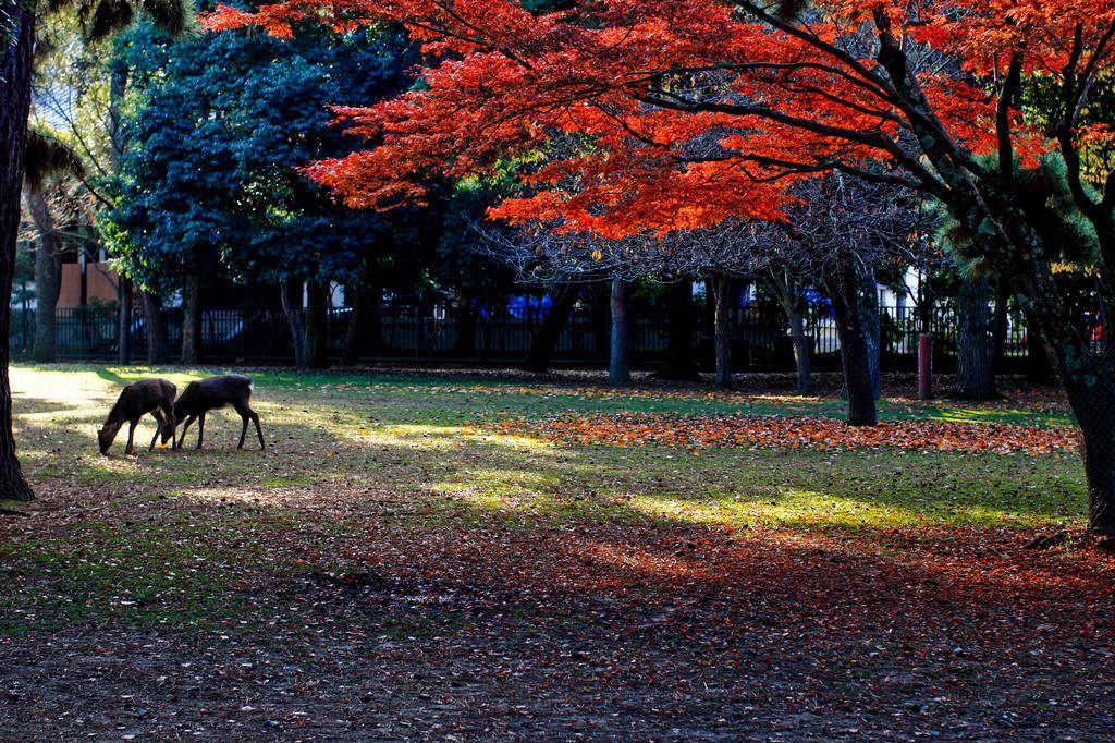 纪南城作品:奈良的早晨