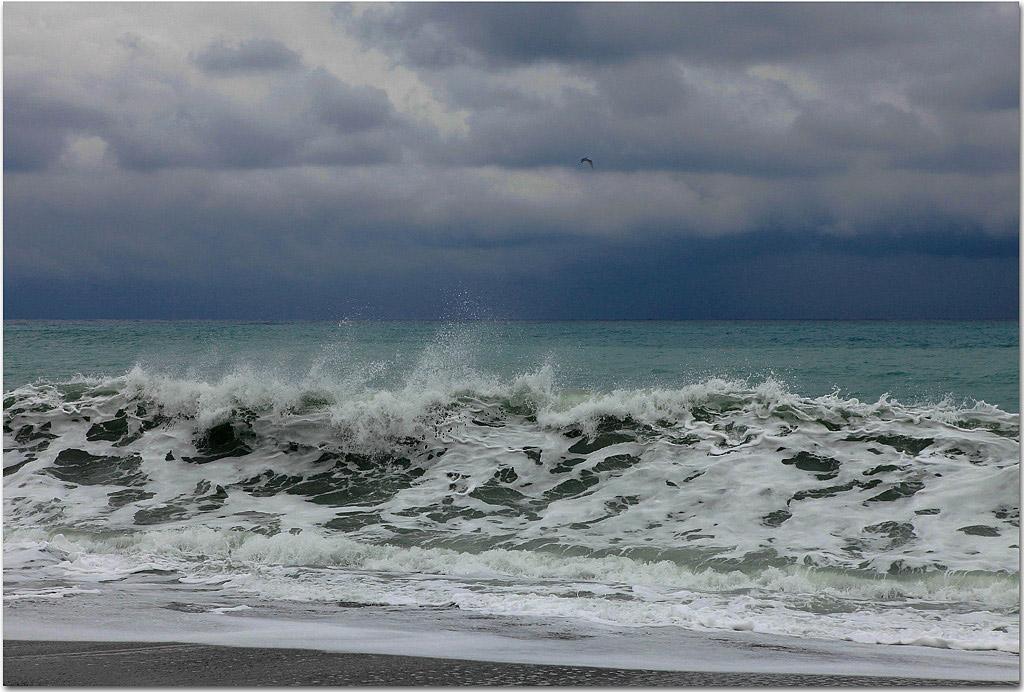gjk作品:太平洋的浪花与海燕