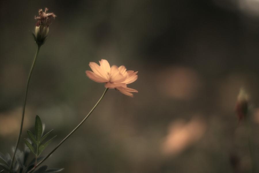 远摄影作品 一朵花