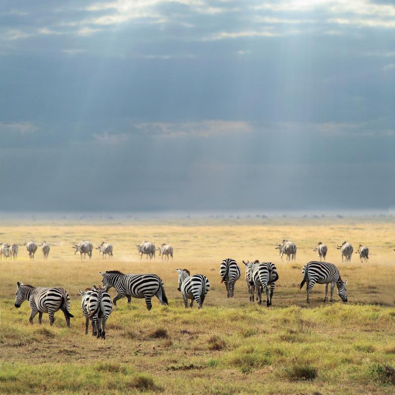 受益作品:动物世界 — 斑马