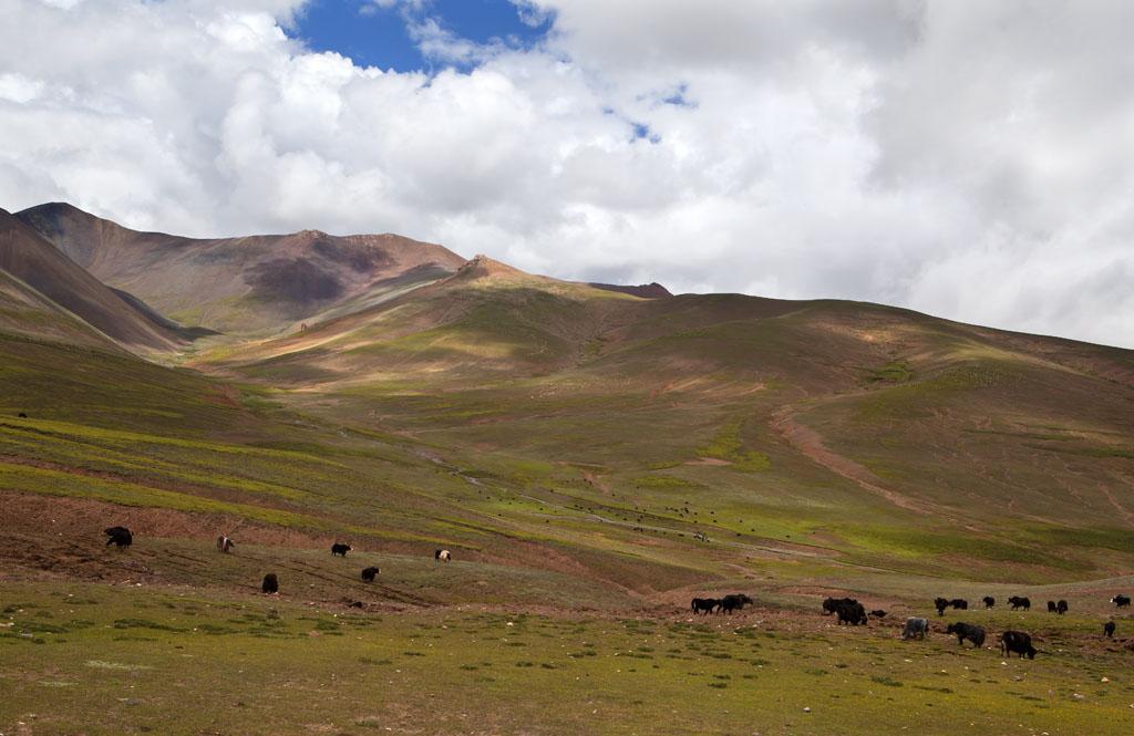 一二丁作品:高原牧场