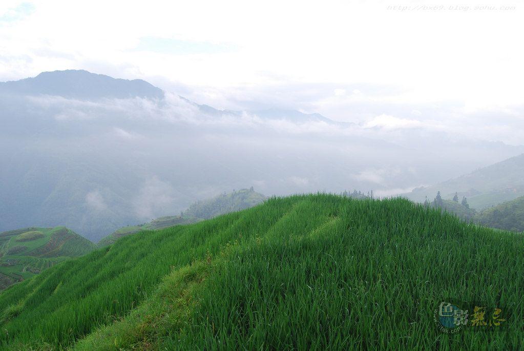 白雪摄影作品:绿色田野