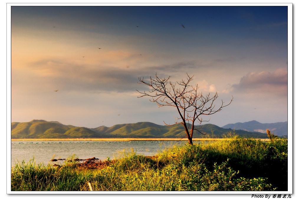 香港老九作品:黄昏小树