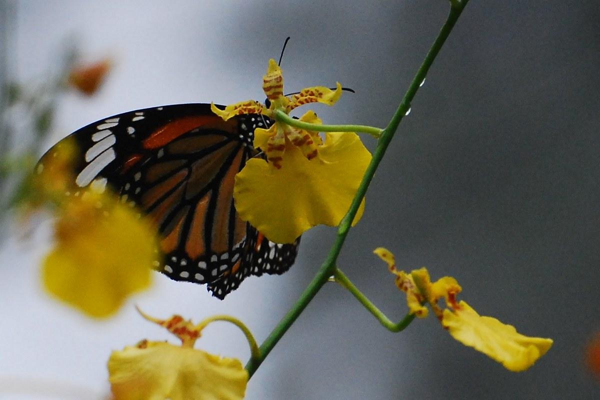 lili5346作品:花与蝴蝶
