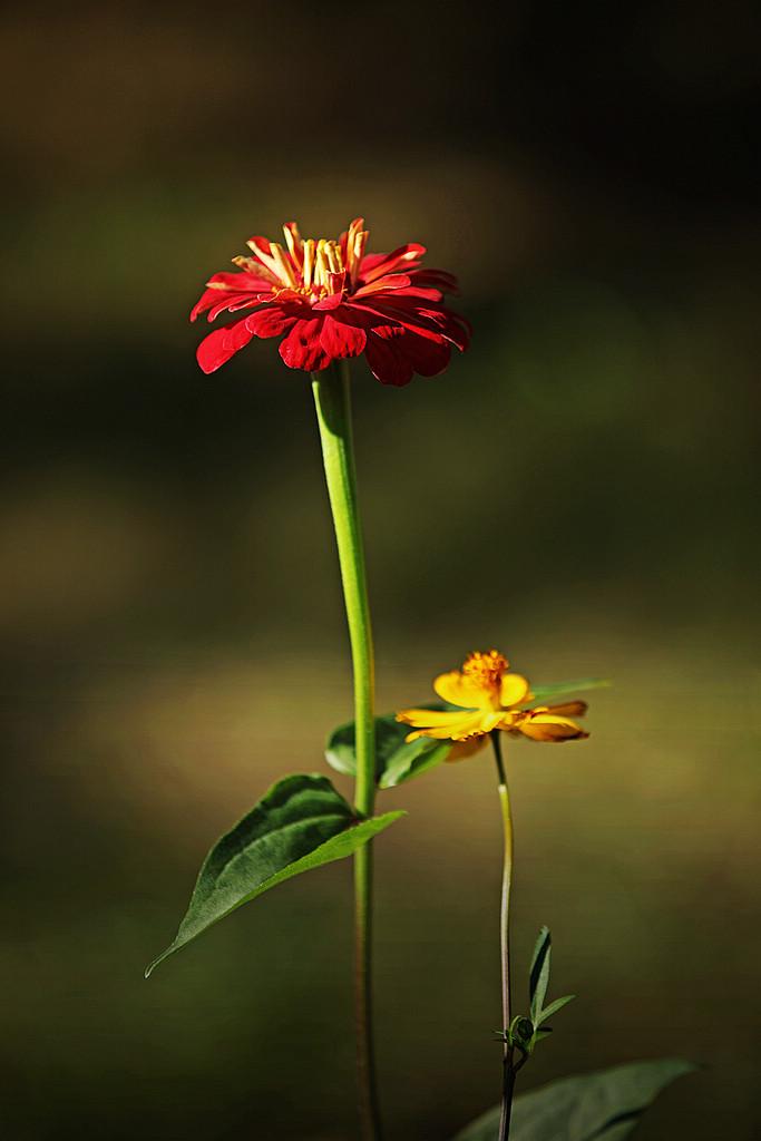 华汉作品:花卉1