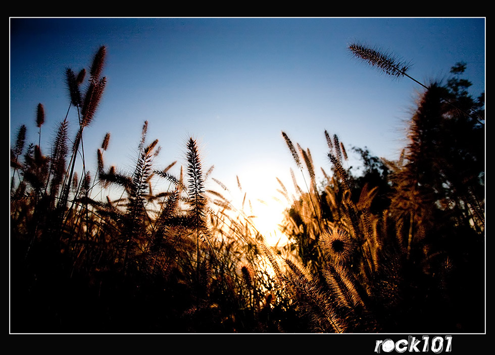 ROCK101作品:秋色