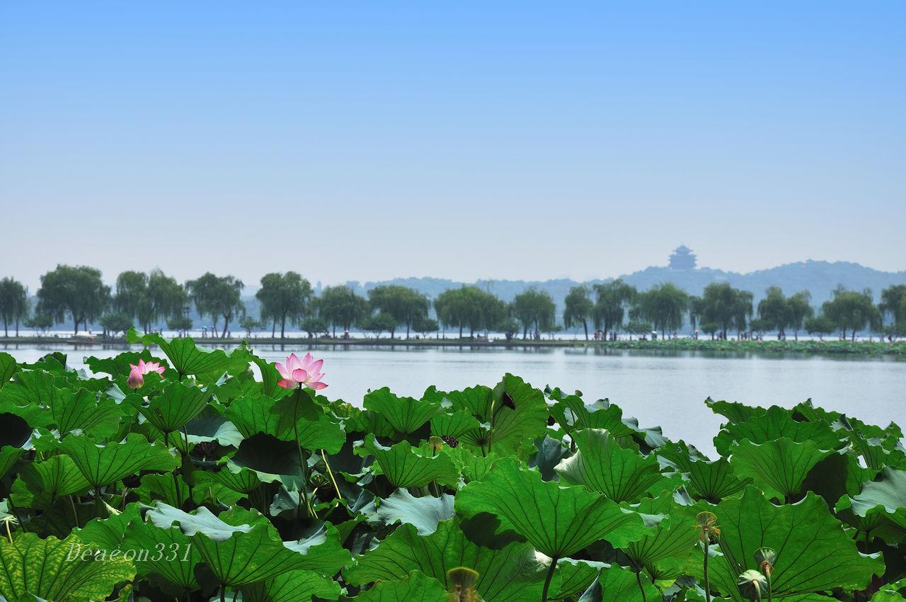 deacon331作品:莲满西湖