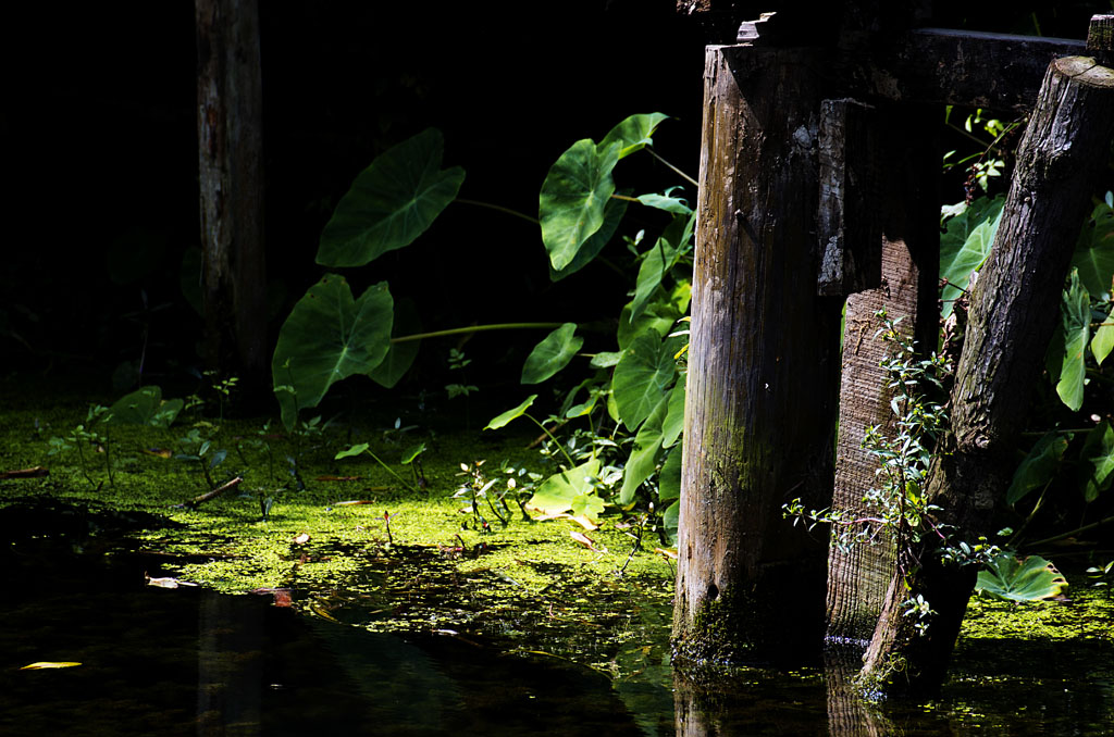 老来光影作品:植物与阳光<二>