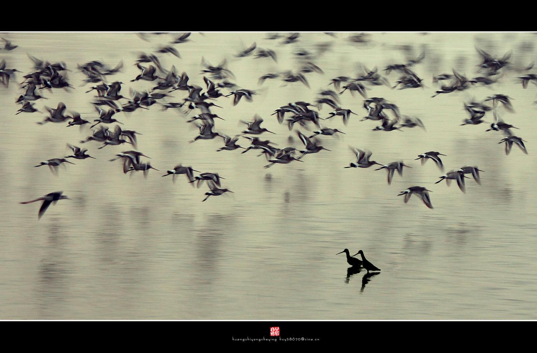 孤鹤闲游作品:《 观 望 》