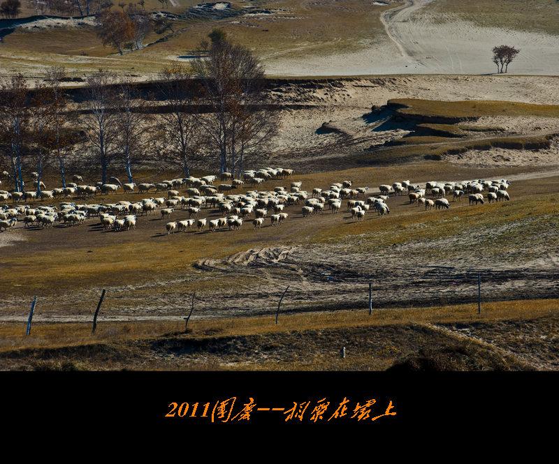 南方兄作品:坝上风光--牧羊