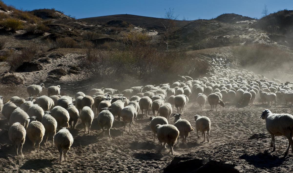 南方兄作品:坝上牧羊