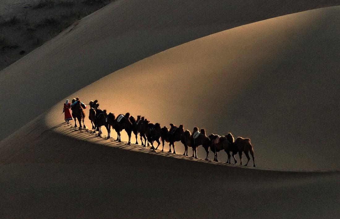 竹林清风作品:大漠驼影