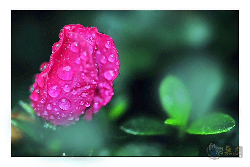 四季春作品:出浴2