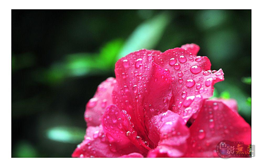 四季春作品:出浴4