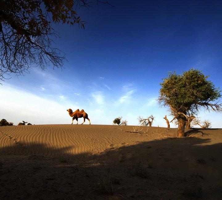 大漠胡烟作品:梦驼铃