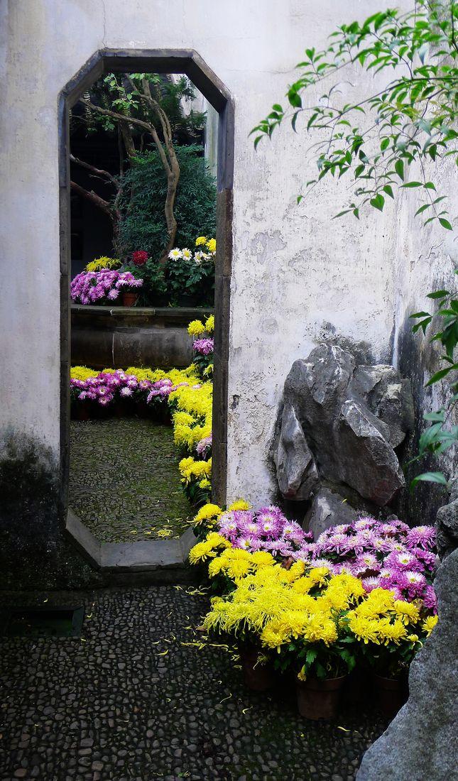 君子兰作品:园中菊
