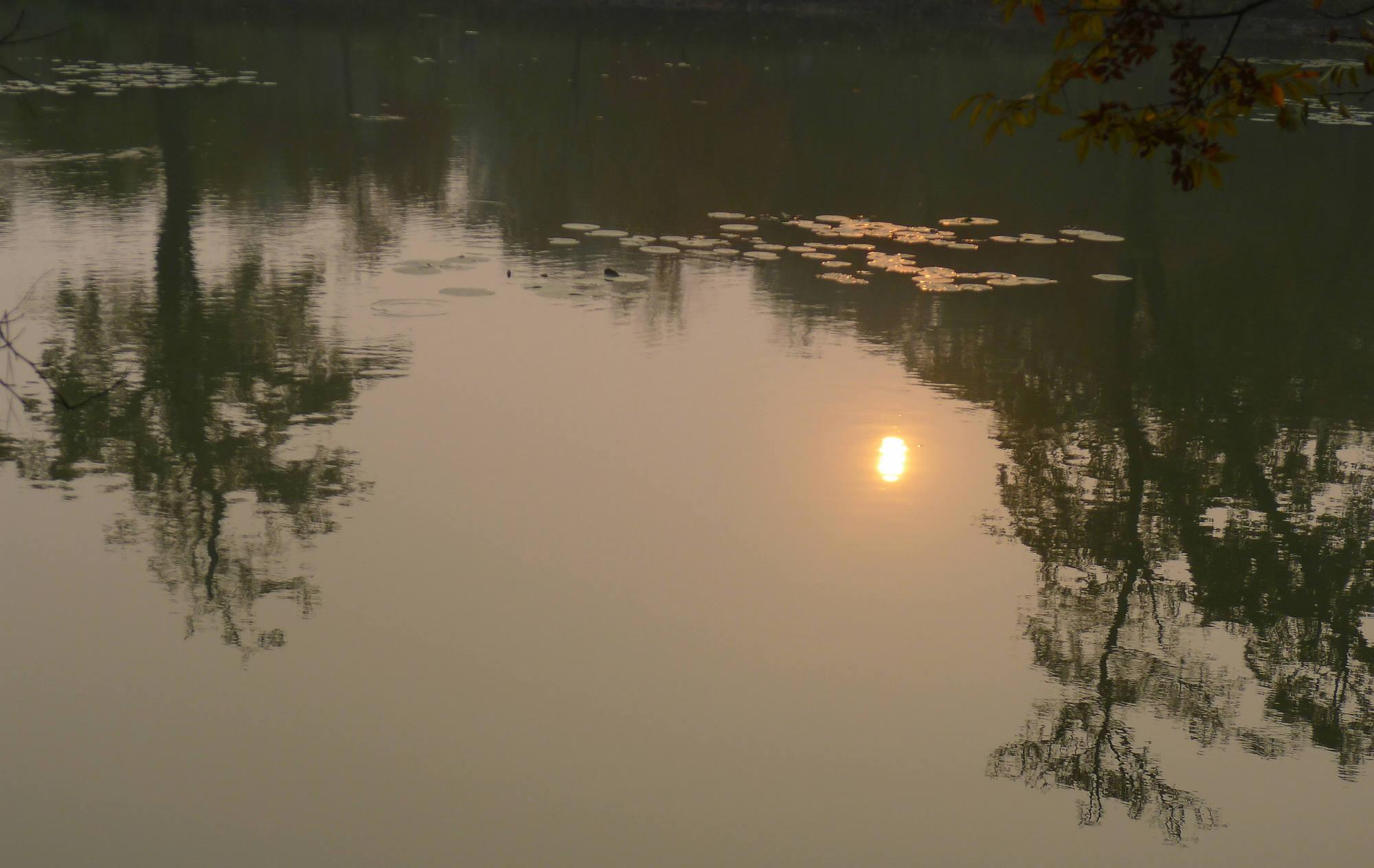 君子兰作品:落水夕阳给的光