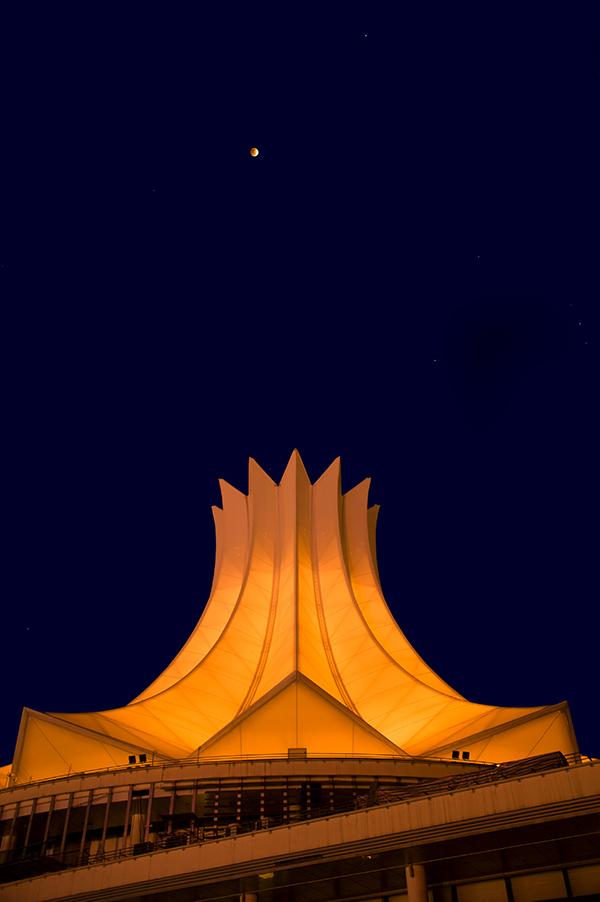 纸虎作品:朱槿花上的明珠