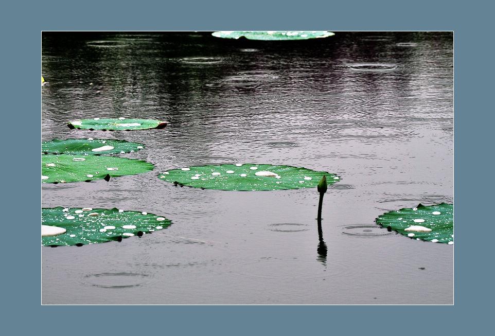 hfgl作品:细雨荷塘