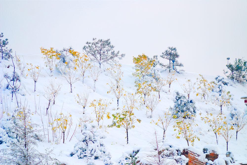 清晨的霞作品:雪后