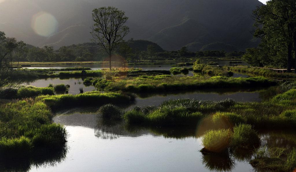 劲舞香溪作品:逆光下拍湿地