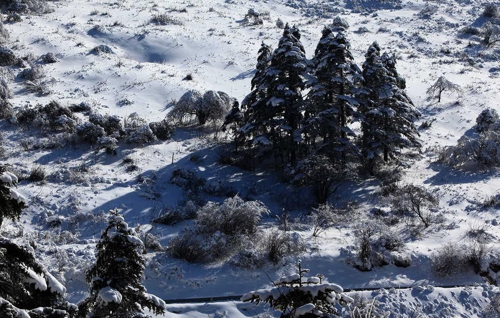 劲舞香溪作品:大雪压青松