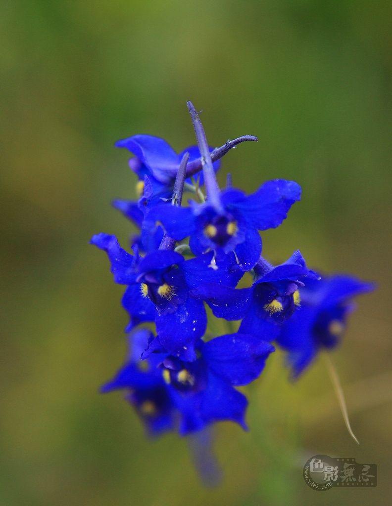 沉降作品:蓝色的花朵