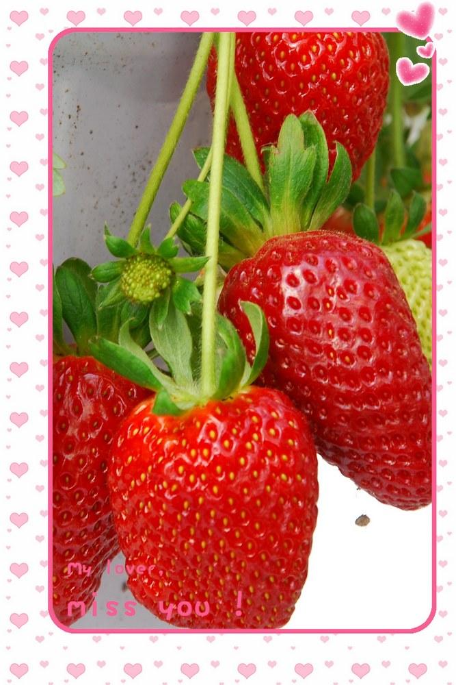 lili5346作品:草莓