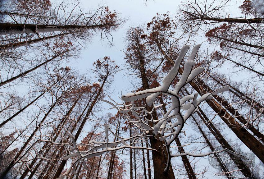 东力传动作品:空寂的林地