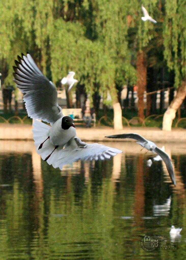沉降作品:翠湖飞鸥