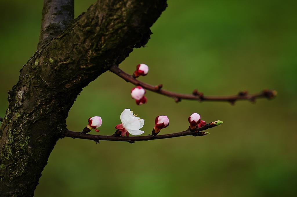老来光影作品:春