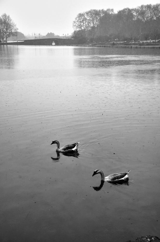 阴柔派作品:一个人的烟雨西湖