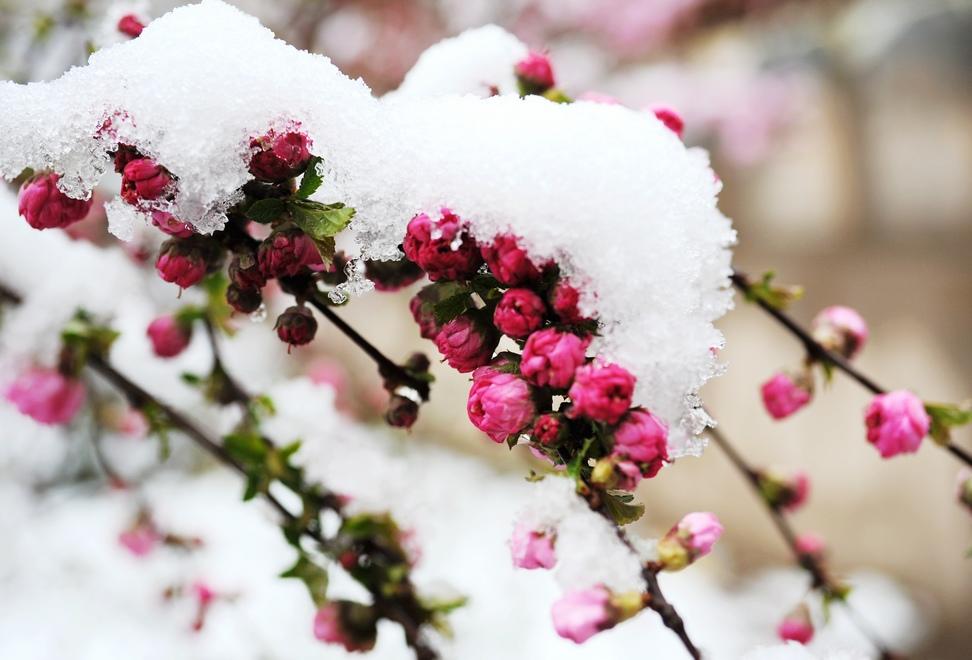 长安羁客作品:春雪