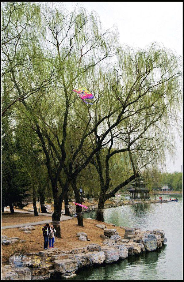 jm300c作品:风筝游春