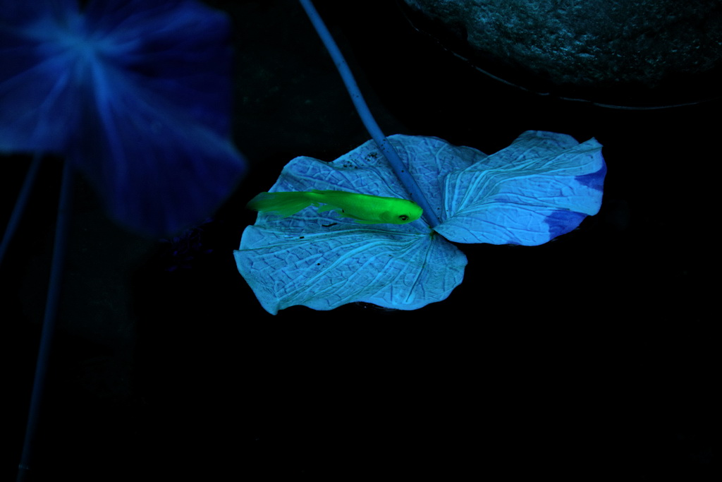 观雾山人作品:蓝色之恋
