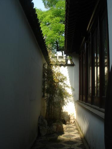 君子兰作品:老宅天井