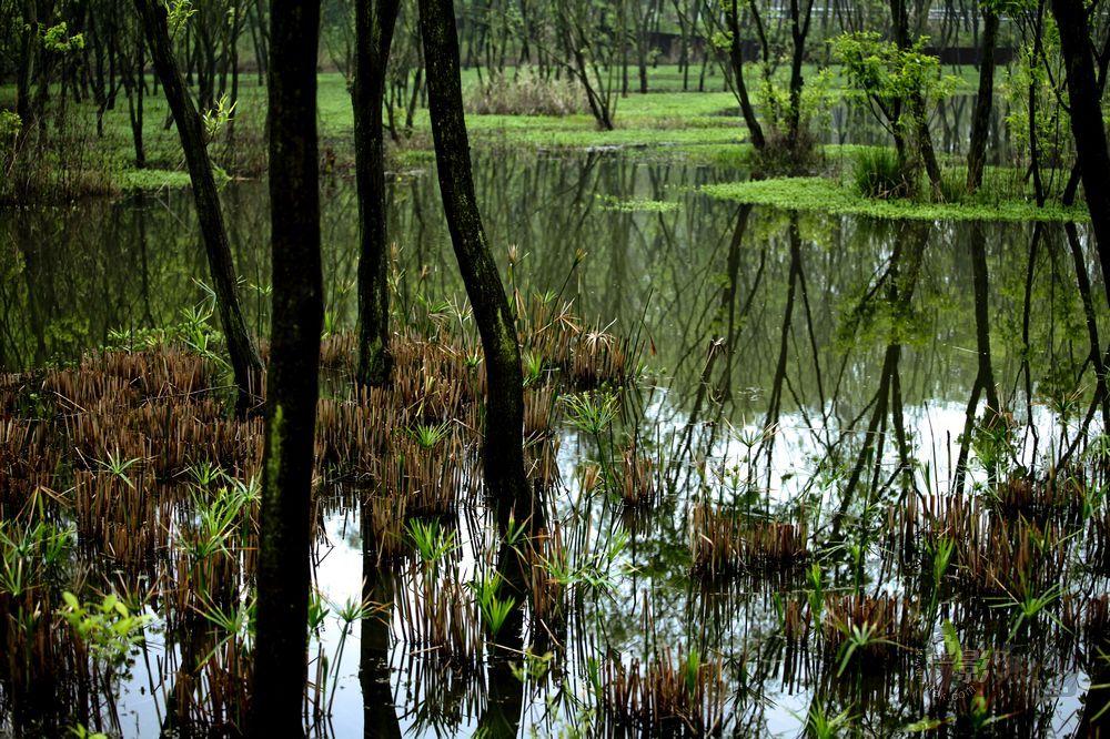 东力传动作品:湿地的春天影像