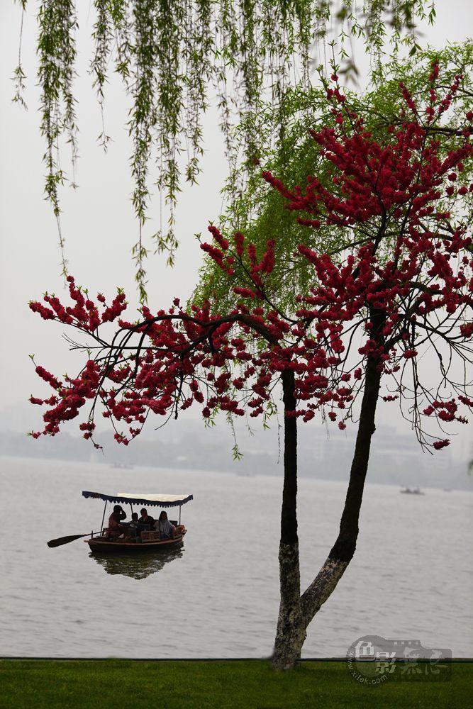 东力传动作品:桃红柳绿之西湖
