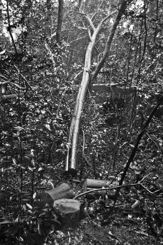 pyxyz作品:被砍伐的树