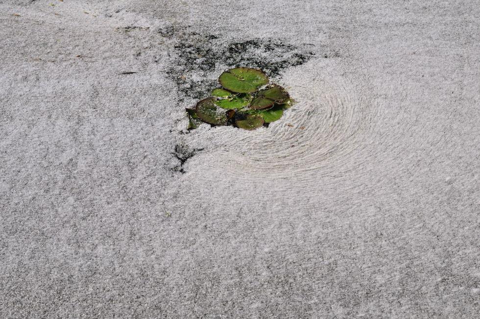 """渔池飘帆作品:""""春雪"""""""