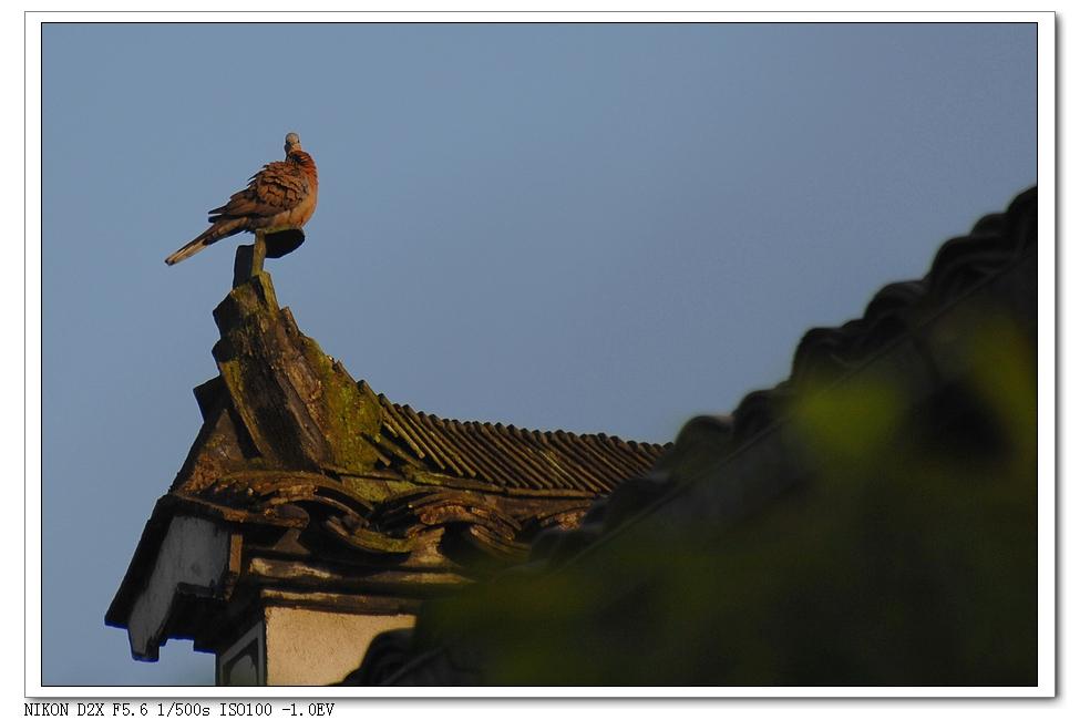 xinxiliu作品:宏村的早晨!