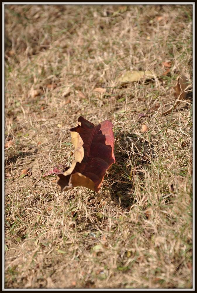dgatiger作品:秋。叶